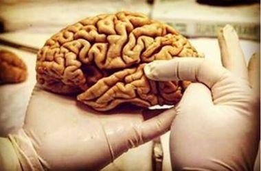 Ученые выяснили, как мозг человека осознает окружающий мир