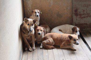 Как привлечь догхантера к ответственности за жестокое обращение с животными