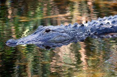 В Австралии поймали крокодила-убийцу