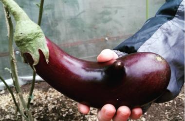 Соцсети раскритиковали презервативы Durex с ароматом баклажана