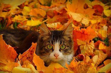 Обои Обнаженная девушка сидит в опавших листьях