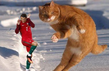 Кот-спортсмен по кличке Котиньо завоевывает интернет: ТОП лучших мемов