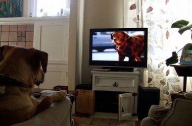 Ученые выяснили, что собаки видят по телевизору