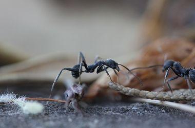 Биологи определили, как муравьи ищут дорогу домой