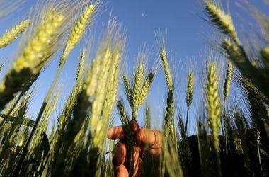 Чому українські аграрії б'ють на сполох?