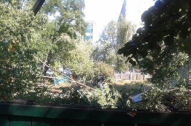В Киеве начали сносить большие деревья в сквере на левом берегу