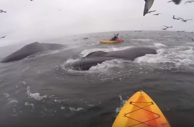 Участник флешмоба решил отжаться посреди океана и наткнулся на китов
