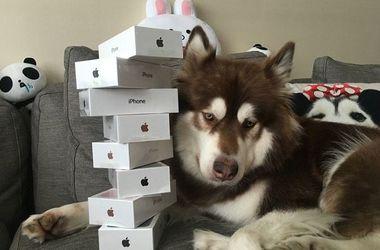 У богатых свои причуды: сын богатейшего китайца купил собаке восемь iPhone 7