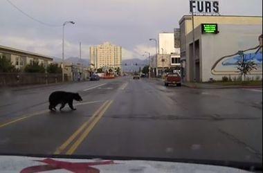 Черный медведь на улицах города шокировал местных жителей