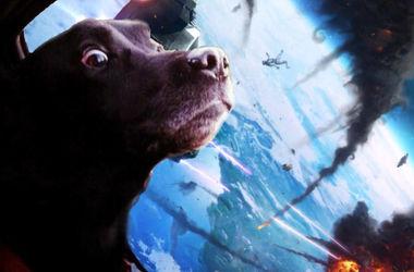 Шокированный быстрой ездой пес стал звездой мемов (фото)