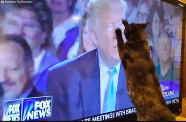 Странная реакция животных на Дональда Трампа: забавное видео