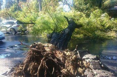 В Одессе на проезжую часть свалилось огромное дерево