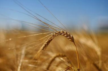 Зерно из оккупированного Крыма тысячами тонн везут за границу