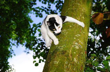 Одессит застрял на дереве, пытаясь спасти кошку