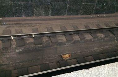 В харьковском метро ловили курицу