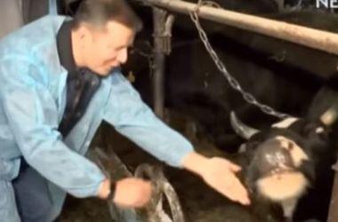 """""""Украина начинается с коровы"""": Ляшко рассказал о проблемах в сельском хозяйстве"""