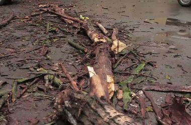 В Винницкой области девушку придавило упавшее дерево