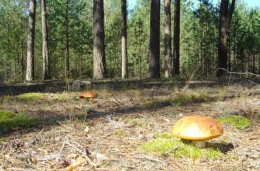 грибы николаевской области фото