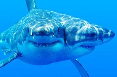 Ученые вырастили в пробирке акулу с двумя головами