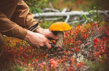 В Херсоне - массовое отравление грибами