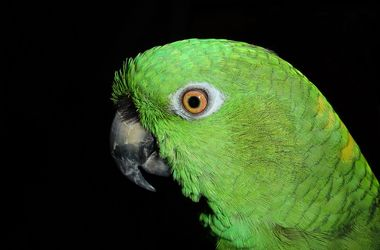 Home parrot told his wife about her husband's infidelity