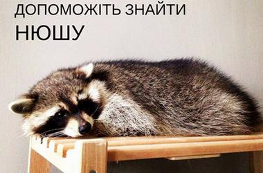 In Kiev from the pavilion at ENEA escaped raccoon Nyusha