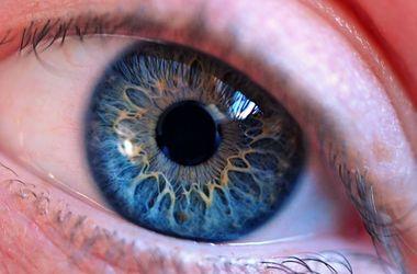 Познавательное видео: эволюция человеческого глаза