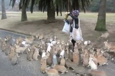 Кролики атакуют: в Японии на острове живет более 700 пушистиков