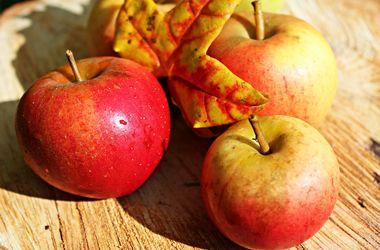 Яблоки из Украины завоевывают рынки новых стран