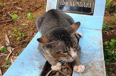 В Индонезии кошка год прожила на могиле своей хозяйки