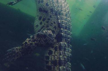 Крокодил напал на голую пару в джакузи