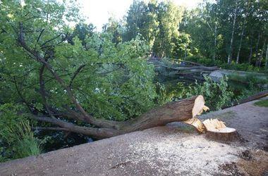 В Львовской области  рухнувшее  дерево раздавило электромонтера