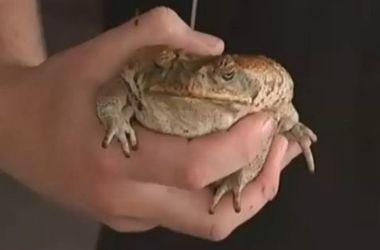 Необычный забег в Австралии: участники – крокодилы и жабы