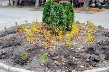 В Киеве массово воруют и уничтожают растения (обновлено)