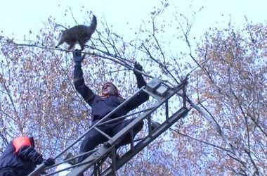 Пугливый енот выжил после падения с 10-метровой высоты
