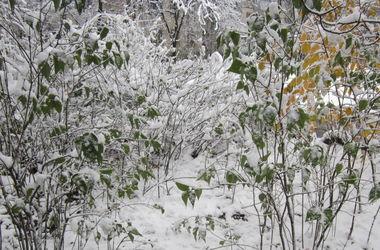 Херсон завалило снегом