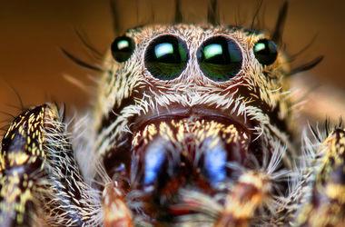 Познавательное видео: почему пауки занимаются каннибализмом
