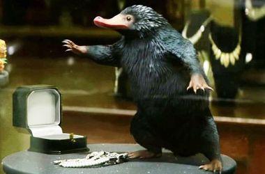 """В Австралии обнаружили самого смешного зверька из """"Фантастических тварей"""""""