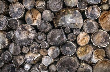 Экспортная пошлина на древесину может обернуться ответными ограничениями ЕС - Марчук