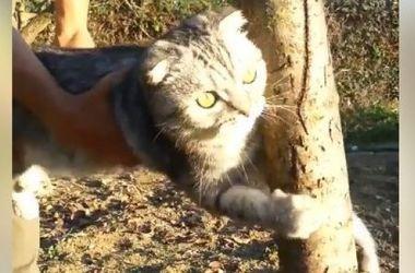 Velká kočičí уцепился za strom a odmítla jít domů