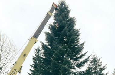 Главная елка Украины отправилась в Киев