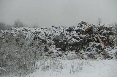 Тонны львовского мусора незаконно выбросили в Сумской области