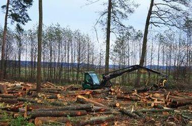 ЕС поддерживает Украину в ее желании защитить свои леса