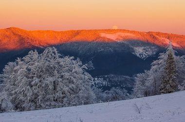 Nazwane najlepsze zdjęcia przyrody Ukrainy za 2016 rok w wersji Wikipedii