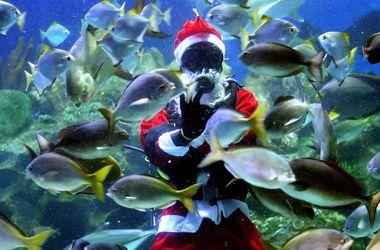 Санта-Клаус поселился в аквариуме