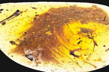 Хвост динозавра впервые найден в янтаре