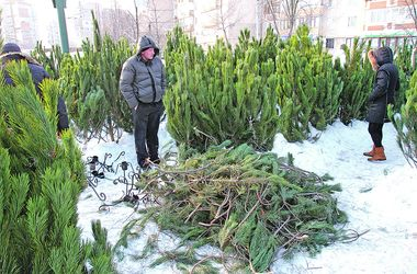 Цена праздника: почем елки в Днепре