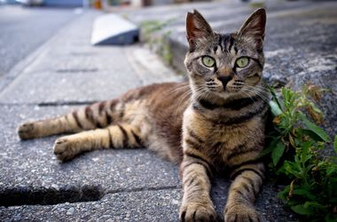 Необычная петиция: киевляне требуют признать права бездомных котов