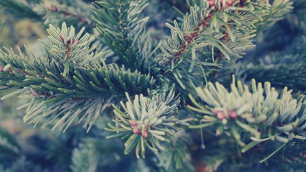 Подольские подростки спилили натерритории клиники елки, чтобы заработать