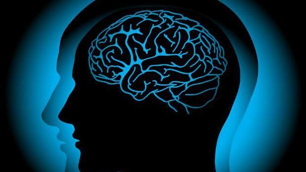 Благодаря рыбе миноги была раскрыта тайна человеческого мозга— Ученые